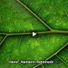 Kur'an-ı Kerim Dinle… Dünyaca Ünlü Hafızlardan Dinle. Farklı Dillerde İzle…