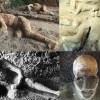 Pompei faciası